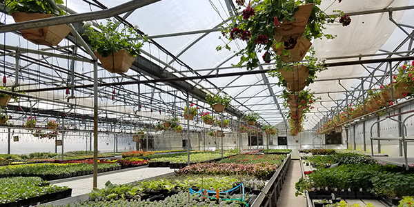 Inside Cascade Cuts Nursery