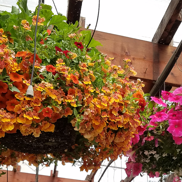 Lush flower baskets at Cascade Cuts