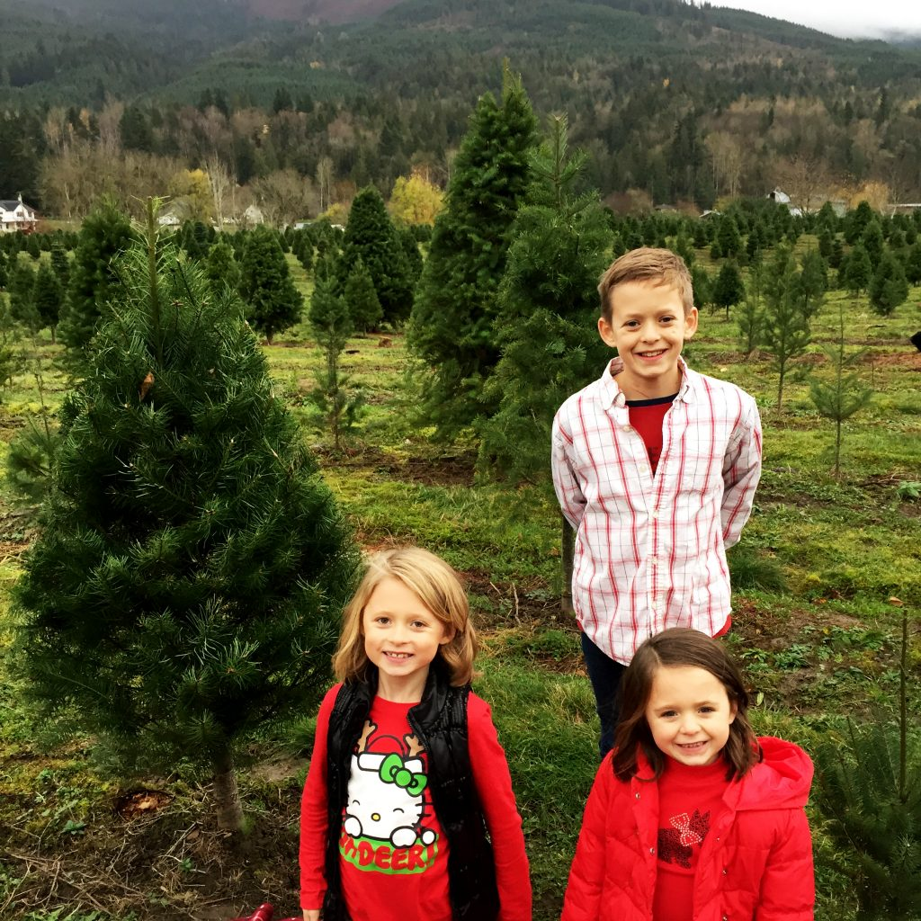 Christmas Trees and U-Cut Tree Farms Whatcom and Skagit Counties