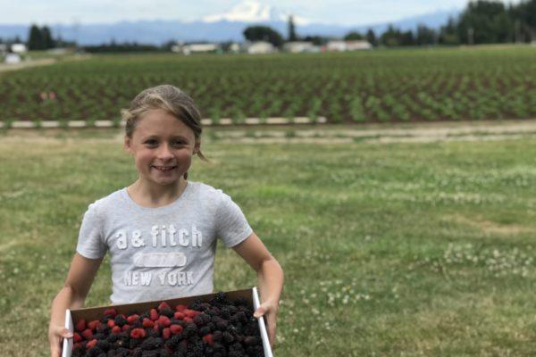 Boxx Berry Farm U-Pick Strawberries Blackberries